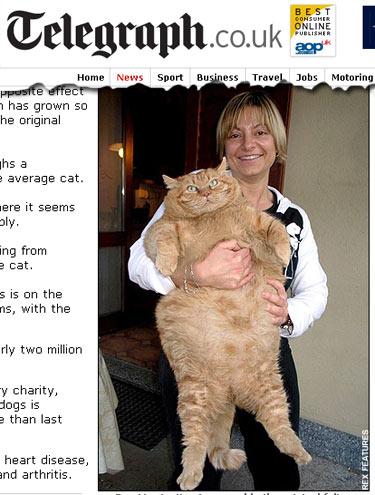 Oranzi, 16 kg